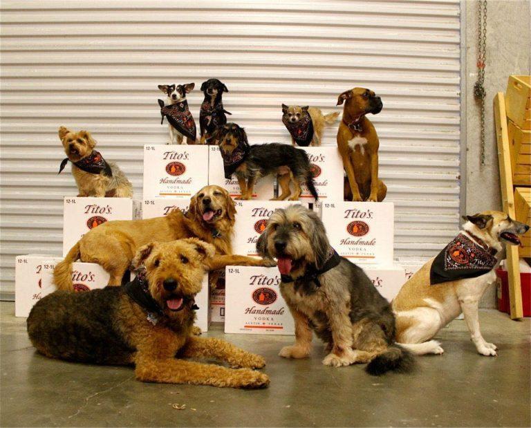 Tito's Handmade Vodka busca mejorar la vida de cientos de perros de Territorio de Zaguates.